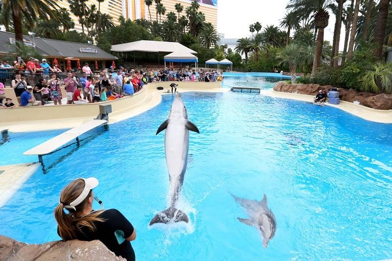 Atividades do Siegfried & Roy Secret Garden and Dolphin Habitat em Las Vegas