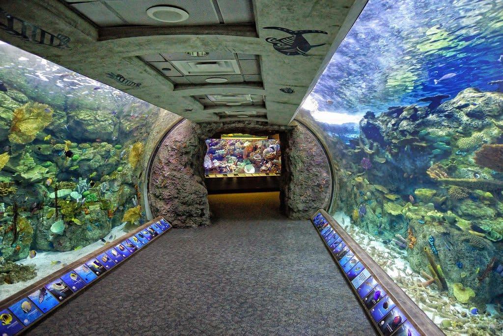 Long Beach na California Aquario
