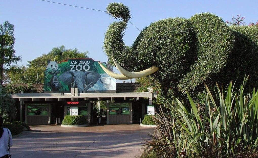 O que fazer em San Diego | San Diego Zoo
