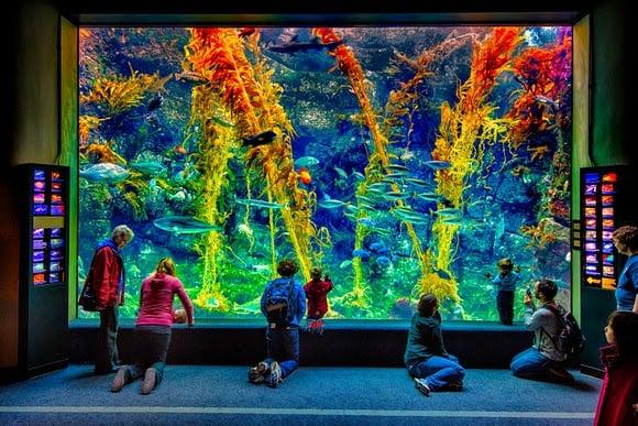 Aquário Birch Aquarium em La Jolla San Diego