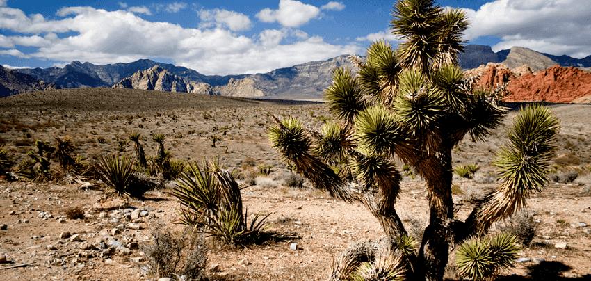 10 precauções no deserto em Las Vegas