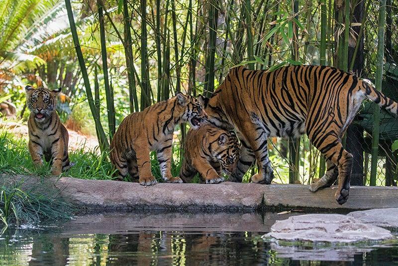 Zoológico em San Diego
